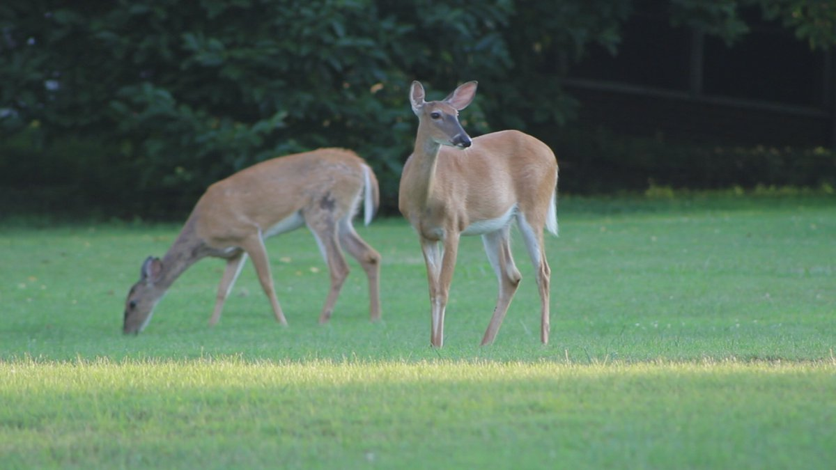 West Virginia Department of Natural Resources predicts a promising season for hunters.