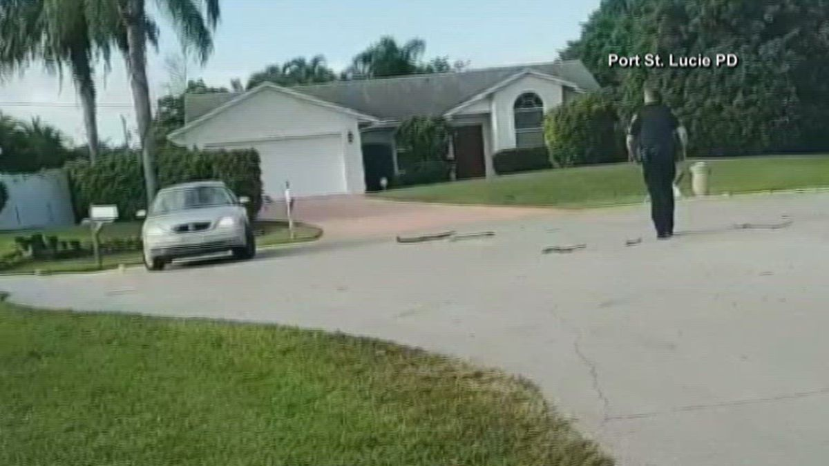 A Florida dog took a solo joyride Thursday, alone, stuck inside a car spinning in reverse for nearly an hour.  (WPTV)