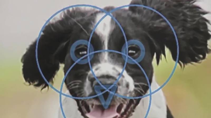 Facial recognition technology is being used to help find lost pets. (Source: CBS)