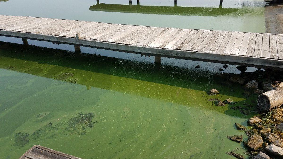 Blue-green algae was found in the Rock River and Lake Koshkonong.