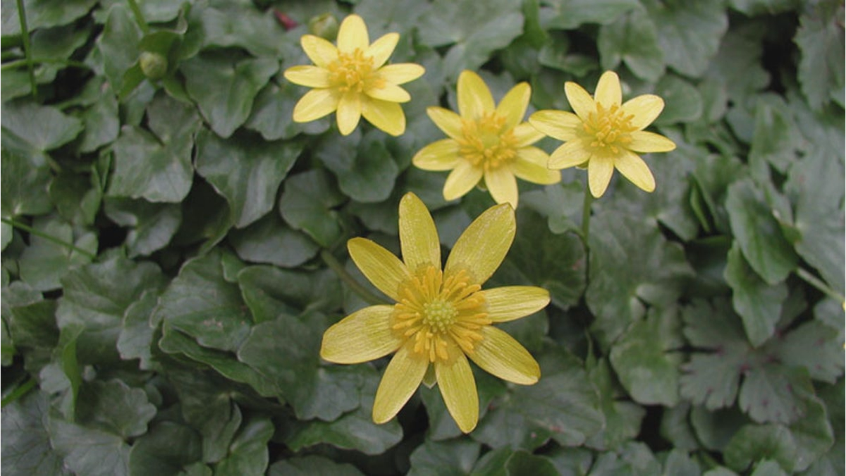 The Wisconsin Department of Natural Resources (DNR) is calling on gardeners, paddlers and...