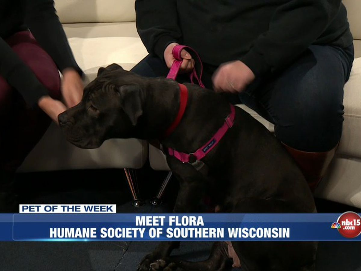 Pet Of The Week Meet Flora