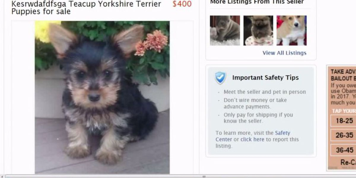 Dog Deception Puppy Scam Targets People Looking For Pets Online