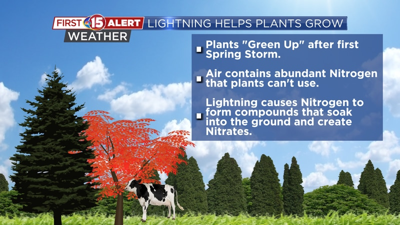 Lightning speeds of the nitrogen cycle and quickly creates nitrates that plants need to survive.