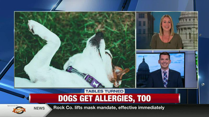 Dogs Get Allergies Too!