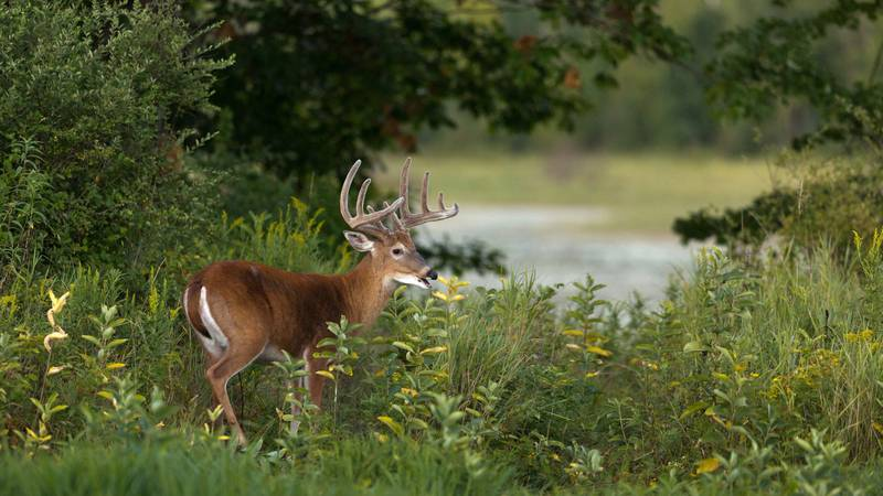 """""""Monitoring deer reproduction has always been part of our deer management program. Yearly since..."""