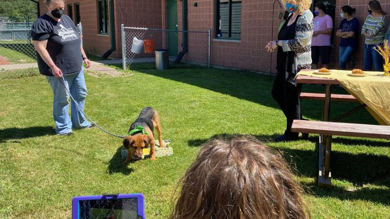 """Dane County Humane Society celebrates 100 years by providing some adoptable dogs a special """"cake"""""""