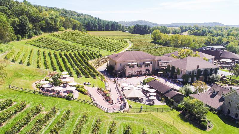 Wollersheim Winery and Distillery has completed another successful harvest, excluding a field...