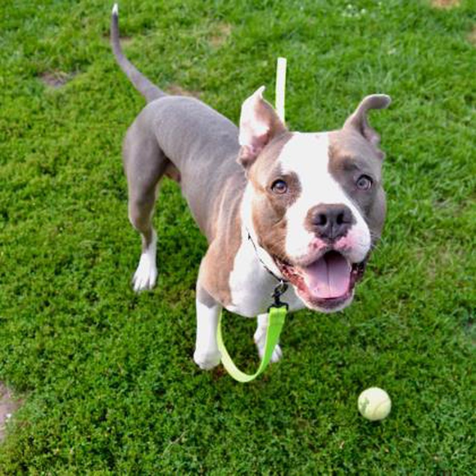 Dane County Humane Society is looking for a loving home to adopt Parsley.