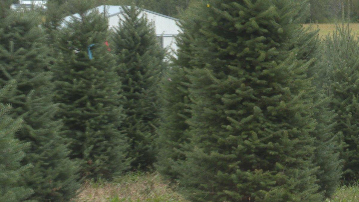 Central Wisconsin Evergreens, Merrill