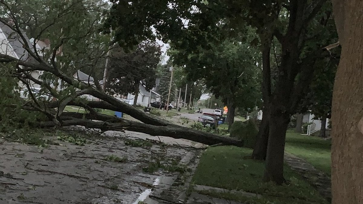 A downed tree in Portage Tuesday night (Source: Sara Marso)