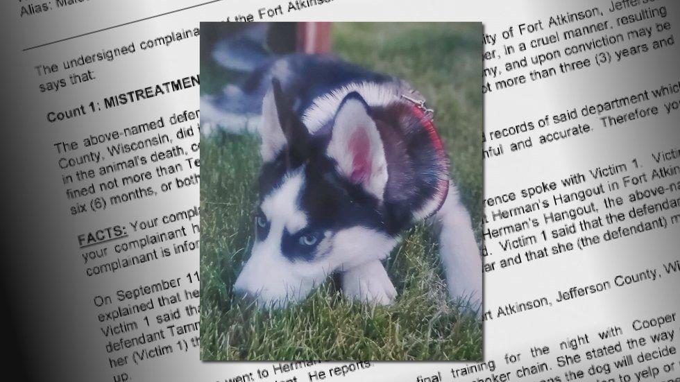 8-month-old Husky mix Cooper