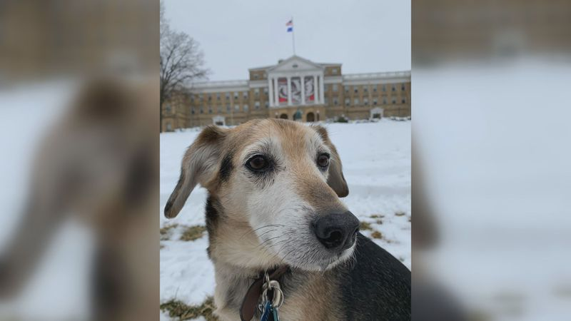 Chester, a clinical trial participant pictured on Bascom Hill during one of his visits