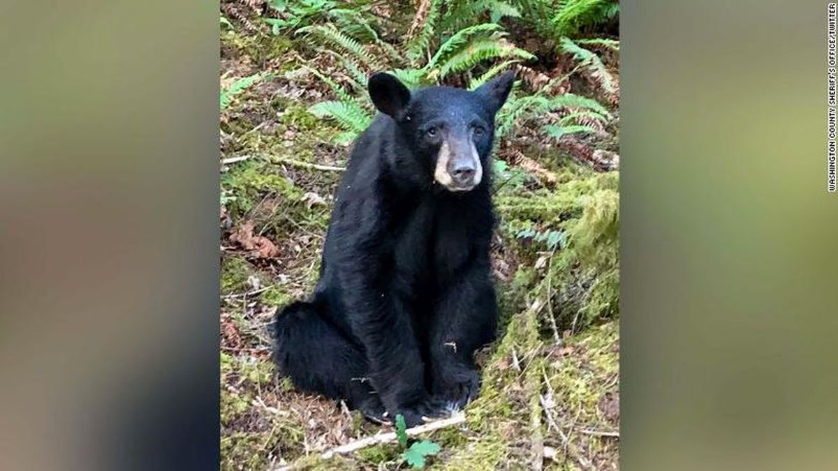 Oregon wildlife officials killed a young black bear because people kept taking selfies with him. (CNN)