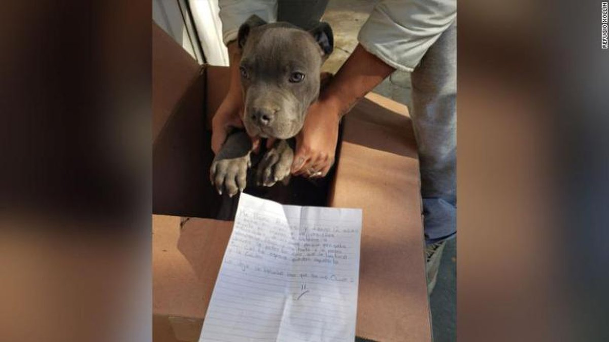 Andrés, a 12-year-old boy left his puppy behind with a touching letter and a stuffed...