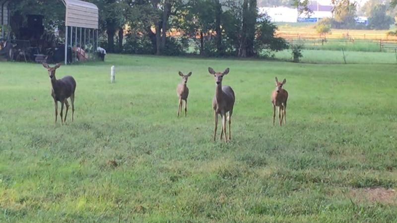 Deer rut season