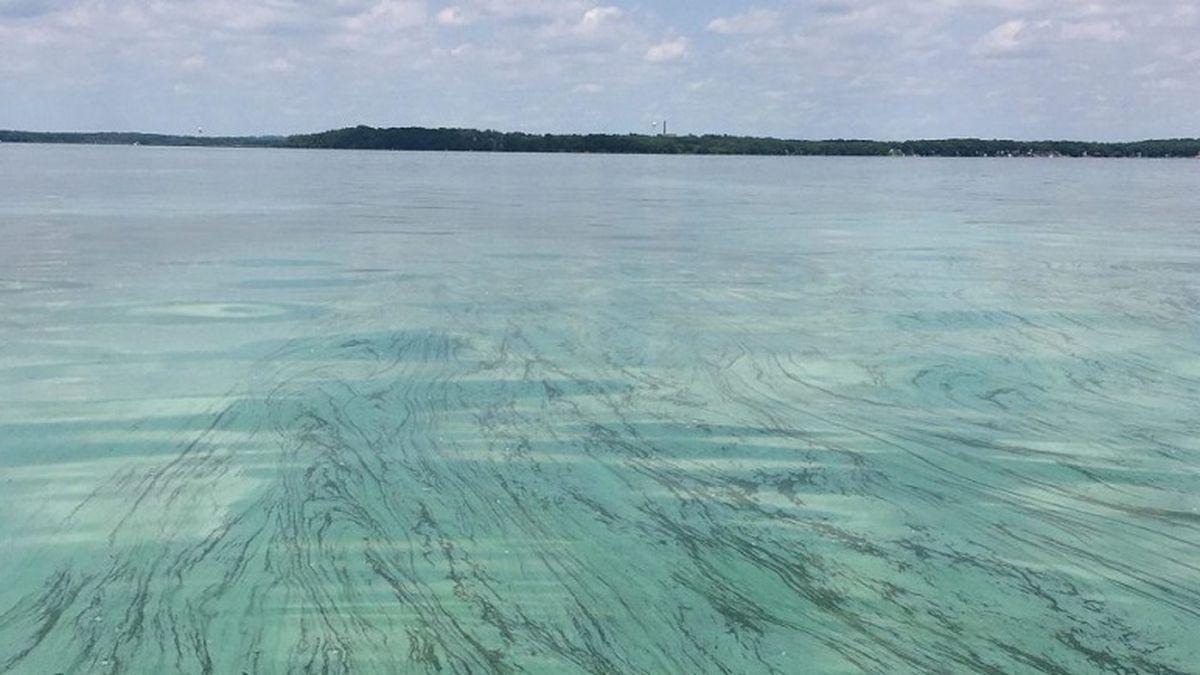 Blue-green algae bloom in Lake Mendota. (Courtesy of UW-Madison Center for Limnology)