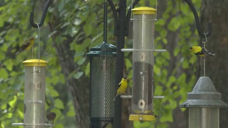 A mystery illness is making birds sick across the country.