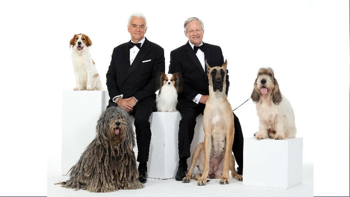 THE NATIONAL DOG SHOW PRESENTED BY PURINA -- Pictured: (l-r) Nederlandse Kooikerhondje,...