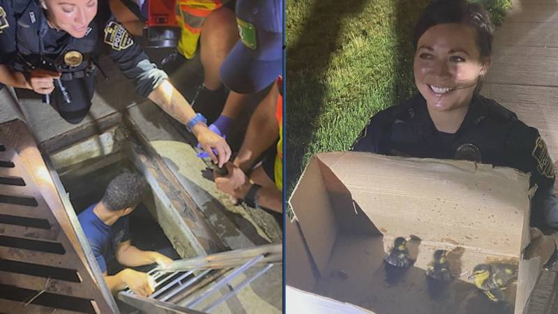 Police and fire crews helped reunite the ducklings with their mama.