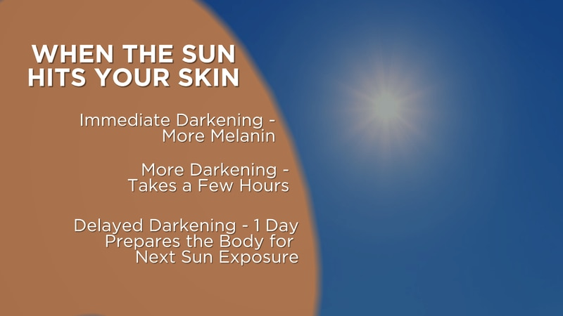 Your skin undergoes a process called Facultative Melanogenesis when it's exposed to sunshine.